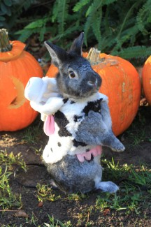 Peter Rabbit Halloween
